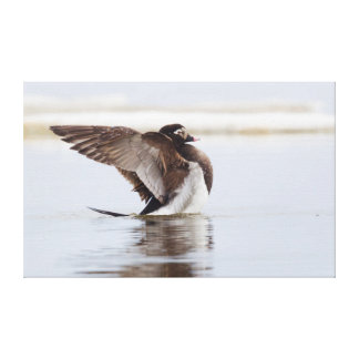 Long-tailed Duck Stretched Canvas Print