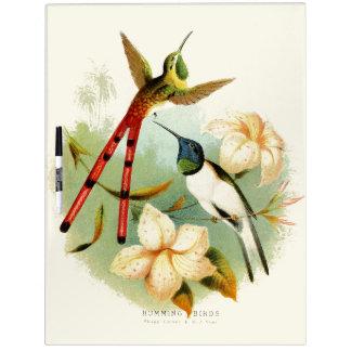 Long Tailed Hummingbirds Wildlife Dry Erase Board