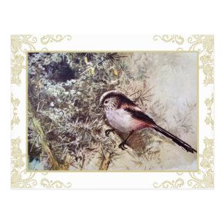 Long-tailed Tit Postcard