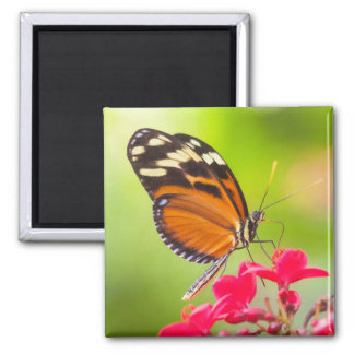 Long wing on a red flower square magnet