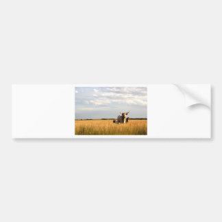 Longhorns on the open range bumper sticker