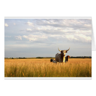 Longhorns on the open range card