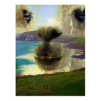 Longing peninsula Dingle Ireland Postcard