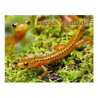 Longtail salamander postcard