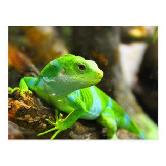 Look  for love and joy iguana lizard reptile postcard