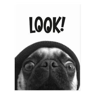LOOK it's Lola the Pug Postcard