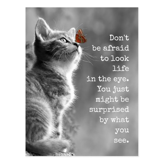 Look Life In the Eye Motivational Quote Postcard