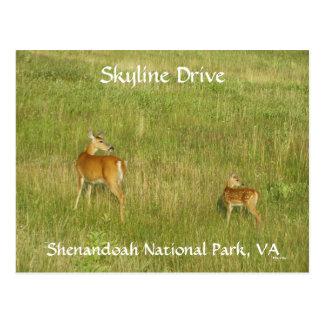 Look!! Postcard