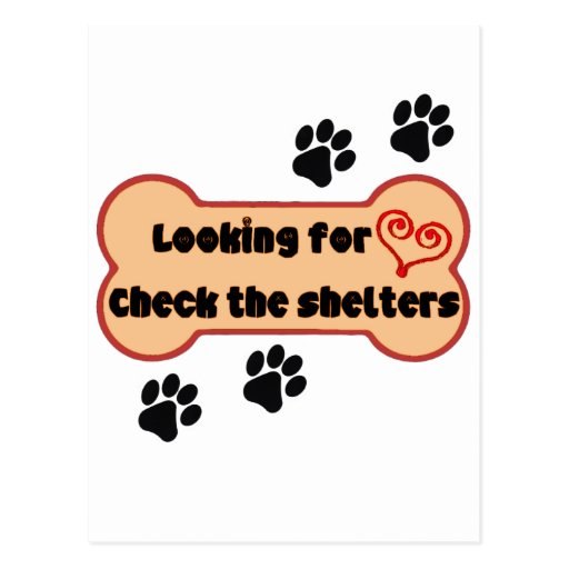 Looking for love? postcard