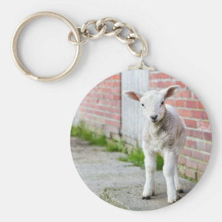Looking lamb stands near brick wall basic round button keychain