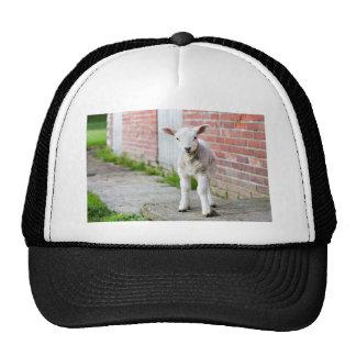 Looking lamb stands near brick wall trucker hat