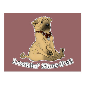 Looking Shar-Pei Postcard