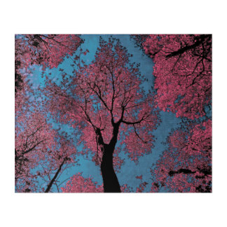 Looking Up at a Blue Sky & Pink Trees Acrylic Print