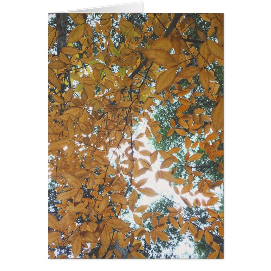 Looking up at Autumn Leaves Card