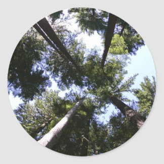 Looking up in the forest classic round sticker