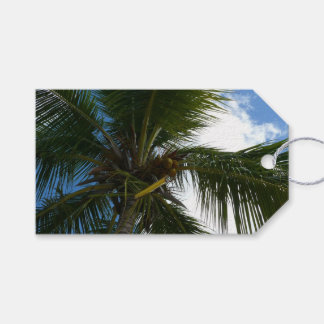 Looking Up to Coconut Palm Tree Tropical Nature Pack Of Gift Tags