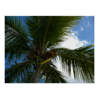 Looking Up to Coconut Palm Tree Tropical Nature Poster
