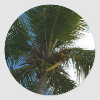 Looking Up to Coconut Palm Tree Tropical Nature Round Sticker