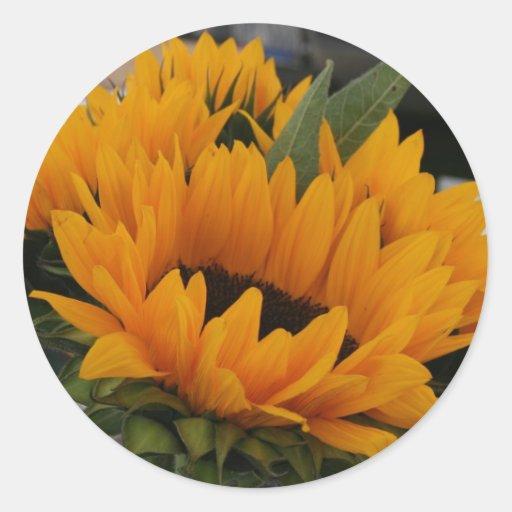 Looks Like a Sunflower Sticker