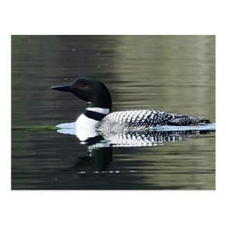 Loon on a mountain lake postcard