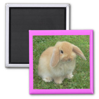 Lop Bunny Magnet