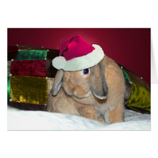 Lop Eared Bunny Xmas Card 1
