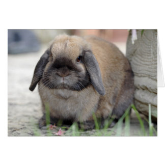 Lop eared dwarf rabbit card