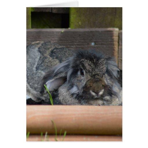 Lop eared rabbit card