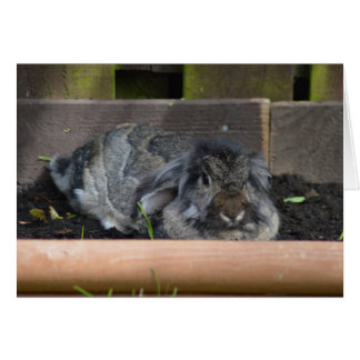 Lop eared rabbit greeting card