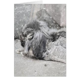 Lop  eared rabbit sleeping card