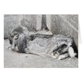 Lop eared rabbit sleeping greeting card