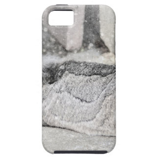 Lop eared rabbit sleeping iPhone 5 covers