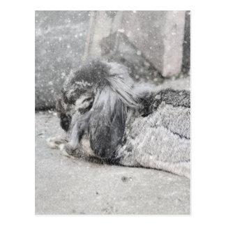 Lop eared rabbit sleeping postcard