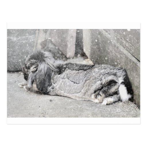 Lop  eared rabbit sleeping post cards
