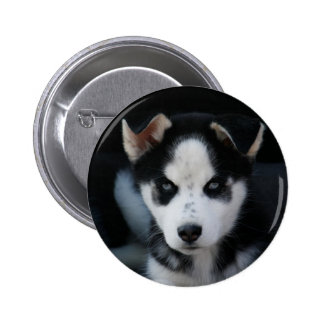 Lop Eared Siberian Husky Sled Dog Puppy Pins