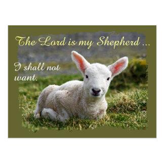 Lord is my Shepherd Little White Lamb Psalm 23 Postcard
