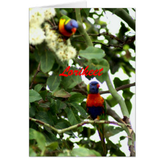 Lorikeet Card