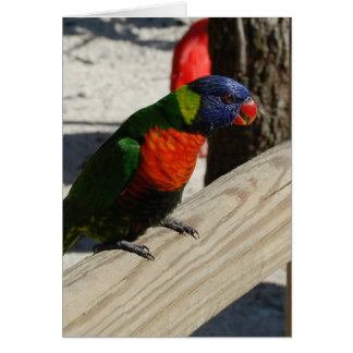 Lorikeet note cards