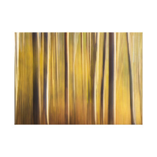 Lost In the Woods II Canvas Print