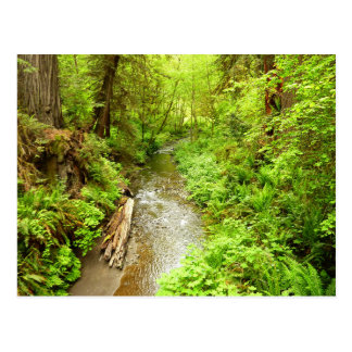 Lost Man Creek II at Redwood National Park Postcard