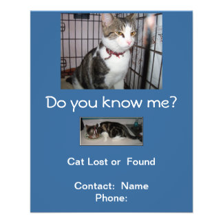 Lost or Found Cat Mailbox Flyer