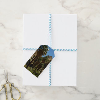 Lost Palms Oasis I at Joshua Tree National Park Pack Of Gift Tags