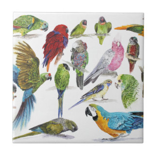 Lots and lots of Parrots on lots and lots of gifts Ceramic Tiles