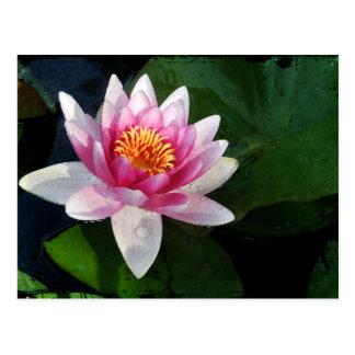 Lotus2 Postcard