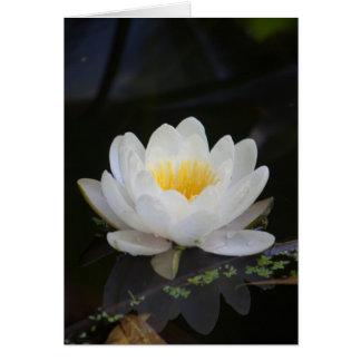 Lotus #2360 card