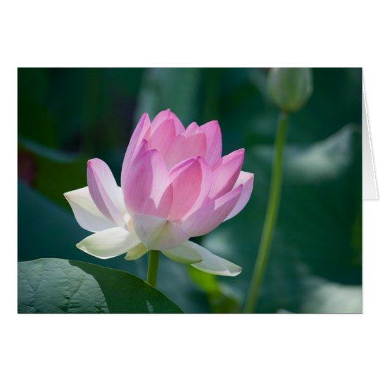Lotus #2444 card