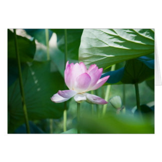 Lotus #2463 card