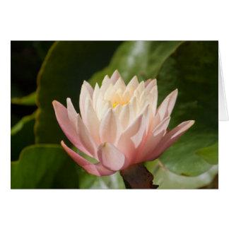 Lotus #2560 card