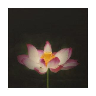 lotus_7751S.jpg Wood Prints