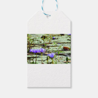 LOTUS BIRD RURAL QUEENSLAND AUSTRALIA GIFT TAGS